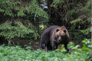 UNTAMED FORESTS AND CURIOUS BEARS IN THE WILDS OF ESTONIA